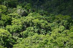 _DSC9595 (Márcia Valle) Tags: trees árvores mataatlântica piau márciavalle nikon d5100 brazil brasilminasgerais nature natureza green verde brasil