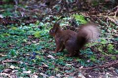 Bin weg (margit37) Tags: vogel vögel natur baum eichhörnchen eichkätzchen bäume nüsse