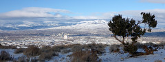 The city in winter, with Utah cedar (simonov) Tags: virginiarange hiking mountains snow winter reno pano panorama peavinepeak peavine peak