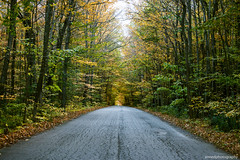 Country Road Take me Home (annedphotography1) Tags: trees road country leaves fall nature landscape