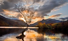 A lonely tree at sunrise (Ade Ward Phototherapy.) Tags: nikon morning autumn phototherapy sun clouds sky mountains water llanberis llynpadarn lake northwales snowdonia sunrise tree lonelytree