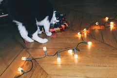 J'aime Noel (alyna16) Tags: cat cats christmas lights animal
