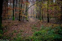 Wald im November (Dieter Höhnel) Tags: november wald herbst landschaft natur