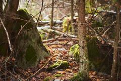 Through the Trees (Jake Maslak) Tags: outside green blue sky nature tree trees leaves winter digital light orange color colour fuji fujifilm xt1