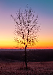 A Tree and Colors (John Westrock) Tags: dodgeville wisconsin unitedstatesofamerica sunrise tree nature lonetree landscape morning johnwestrock governordodge canoneos5dmarkiv canonef2470mmf28lusm nopeople vertical outdoors