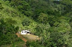 Vizinho da mata (Márcia Valle) Tags: nature natureza márciavalle nikon d5100 brasil brazil primavera springtime green verde mataatlântica house mata roça casa