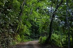 Uma bela luz no caminho (Márcia Valle) Tags: nature natureza márciavalle nikon d5100 brasil brazil primavera springtime green verde mataatlântica