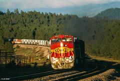 Last Light in the Forest (thechief500) Tags: atsf arizonadivide bnsf railroads seligmansubdivision williamsjct az usa santaferailway arizona