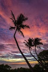 Kauai Rainbow Sky (PIERRE LECLERC PHOTO) Tags: sunrise kauai hawaii hawaiianislands sky palmtrees coconuttrees silhouette paradise travel sea ocean pacificocean idyllic nature tropical landscape clouds colors pierreleclercphotography