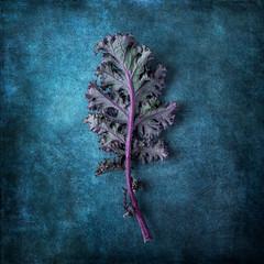 Purple Kale (saraghedina) Tags: stem bright freshness one square blue color texture 50mm canon closeup vegetable cabbage fresh healthy superfood vegetarian vegan green purple leaf kale