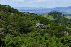 Um dia de verdes luminosos (Márcia Valle) Tags: nature natureza márciavalle nikon d5100 brasil brazil primavera springtime green verde mataatlântica montanhas mountains