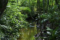 Remanso (Márcia Valle) Tags: nature natureza márciavalle nikon d5100 brasil brazil primavera springtime green verde mataatlântica remanso riacho creek floresta mata forest