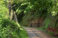 _DSC9582 (Márcia Valle) Tags: trees árvores mataatlântica piau márciavalle nikon d5100 brazil brasilminasgerais nature natureza green verde brasil