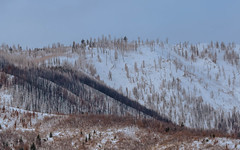 Up in the hills (hicken999) Tags: hills outside utah fall snow trees morning