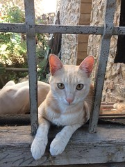 (christelle_cornen) Tags: athens greece cat greekcat