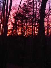Wooded sunset (jaredsank) Tags: silhouette color sunset sky woods trees