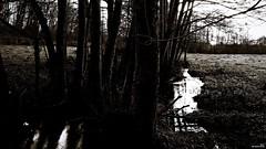 A la tombée de la nuit (Un jour en France) Tags: canoneos6dmarkii canonef1635mmf28liiusm eos noiretblanc noiretblancfrance sepia black arbre rivière soleil contrejour