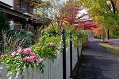 Autumn Fence (Erich Schieber) Tags: australia autumn fall fence botany suburbia