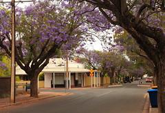 Jacaranda Time (Darren Schiller) Tags: australia adelaide blackforest closed derelict disused decaying empty history jacaranda suburbs streetscape tree street flowers lilac