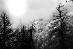 Dark, Cold Winter (Jake Maslak) Tags: digital bw xt1 winter sky cold dark night trees mountains