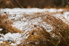 Grass (Jake Maslak) Tags: outside green blue sky nature tree trees leaves winter digital light orange color colour fuji fujifilm xt1