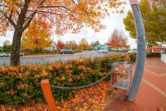 Urban Autumn View (Erich Schieber) Tags: shoppingtrolley autumn urban orange tree fall shoppingcart australia botany