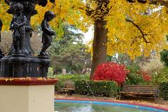 Cook Park Orange (Erich Schieber) Tags: australia autumn park cookpark orange fountain water botany tree bench