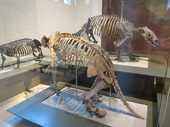 IMG_2671 (Brechtbug) Tags: 2019 prehistoric sloth other type skeletons hanging american museum natural history 79th street central park west new york city statue president sculpture african native indian nyc 12152019 bone bones skeleton prehistory