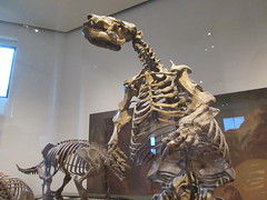 IMG_2663 (Brechtbug) Tags: 2019 prehistoric sloth other type skeletons hanging american museum natural history 79th street central park west new york city statue president sculpture african native indian nyc 12152019 bone bones skeleton prehistory