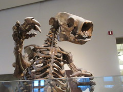 IMG_2659 (Brechtbug) Tags: 2019 prehistoric sloth other type skeletons hanging american museum natural history 79th street central park west new york city statue president sculpture african native indian nyc 12152019 bone bones skeleton prehistory
