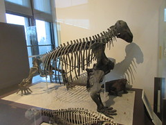 IMG_2706 (Brechtbug) Tags: 2019 prehistoric sloth other type skeletons hanging american museum natural history 79th street central park west new york city statue president sculpture african native indian nyc 12152019 bone bones skeleton prehistory