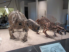 IMG_2701 (Brechtbug) Tags: 2019 prehistoric sloth other type skeletons hanging american museum natural history 79th street central park west new york city statue president sculpture african native indian nyc 12152019 bone bones skeleton prehistory