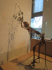 IMG_2698 (Brechtbug) Tags: 2019 prehistoric sloth other type skeletons hanging american museum natural history 79th street central park west new york city statue president sculpture african native indian nyc 12152019 bone bones skeleton prehistory