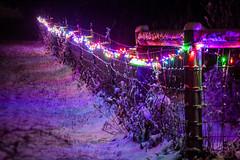 Christmas Fence - Tilt/Shift (yorgasor) Tags: sony a7r4 a7riv hasselblad 150mm cf tiltshift ts aroxfoto christmas fence lights christmaslights