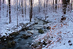 Winter River (kris.notaro) Tags: winter snow river stream trees branches rocks motion long exposure december connecticut color green sky forest