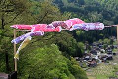 Koinobori @ Shirakawa-go (Rick & Bart) Tags: 白川郷 worldculturalheritagesite unesco japan nippon 日本 rickbart city landoftherisingsun rickvink canon eos70d gifu koinobori 鯉のぼり windsock carp museum openairmuseum