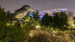 Kingfisher Meets Marina Bay Sands (yoosangchoo) Tags: singapore sands bay marina gardens night kingfisher pool infinity