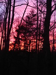Wooded sunset (jaredsank) Tags: silhouette color trees woods sunset sky