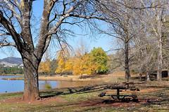 Coffee View (Erich Schieber) Tags: australia lake coffee dam landscape botany tree bench autumn fall