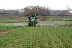 Cultivos 'ecológicos' (Micheo) Tags: spain vegadegranada crops cultivo cosecha ajos fumigacion tractor surcos verde