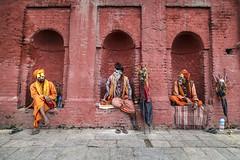 "Sadhu near Shree Pashupatinath Temple (Ann Kruetzkamp) Tags: kruetzkamp ann annkruetzkamp documentary photography photojournalism markets ""adventureconsultants"" nepali nepal kathmandu october 2019 adventure travel canon ""d5markiii"" ""canonphotography"" ""adventurephotography"" ""travelphotography"" autumn market sadhus sadhu shiva saddhu jogi sannyasi vairagi"