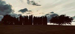 #iphoneography #phoneography #landscape #trees #Sky #clouds #Sunset #cemetery #Dark #streetphotography #nature #Kamloops #Canada (Alex A Frost) Tags: iphoneography phoneography landscape trees sky clouds sunset cemetery dark streetphotography nature kamloops canada