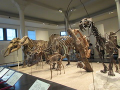 IMG_2704 (Brechtbug) Tags: 2019 prehistoric sloth other type skeletons hanging american museum natural history 79th street central park west new york city statue president sculpture african native indian nyc 12152019 bone bones skeleton prehistory