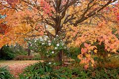 Orange Botanic Garden (Erich Schieber) Tags: australia autumn fall park orangebotanicgarden tree chair