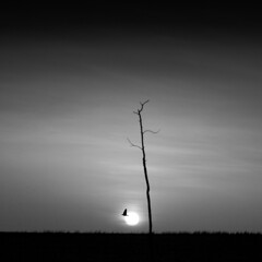 Bajos vuelos (una cierta mirada) Tags: bird flying tree landscape sun sunset sky nature bnw blackandwhite outdoors minimal minimalism