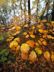 FB025921 E-M5ii 7mm iso200 f2.8 1_100s -0.7 (Mel Stephens) Tags: 20191102 201911 2019 q4 tall 3x4 olympus omd em5ii ii microfourthirds m43 mft mirrorless mzuiko 714mm pro gps truecolor uk scotland aberdeenshire tollohill woods plant plants nature flora leaves autumn