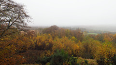 FB025908 E-M5ii 7mm iso200 f5.6 1_125s 1.3 (Mel Stephens) Tags: 20191102 201911 2019 q4 widescreen wide 16x9 olympus omd em5ii ii microfourthirds m43 mft mirrorless mzuiko 714mm pro gps truecolor uk scotland aberdeenshire tollohill woods plant plants nature flora landscape autumn