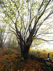 FB025893 E-M5ii 7mm iso200 f2.8 1_125s 1.3 (Mel Stephens) Tags: 20191102 201911 2019 q4 tall 3x4 olympus omd em5ii ii microfourthirds m43 mft mirrorless mzuiko 714mm pro gps truecolor uk scotland aberdeenshire tollohill woods plant plants nature flora tree trees