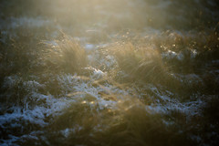 Winter makes its claim (tonguedevil) Tags: outdoor outside countryside nature autumn winter snow moorland field grass colour light shadows sunlight fuji