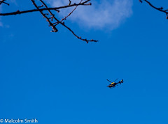 Special Branch (M C Smith) Tags: blue white black yellow helicopter sky branch flying cloud negativespace buds pink letters